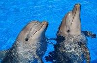 В окупованому Криму бойові дельфіни українських ВМС загинули від голоду