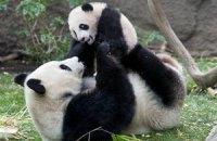 П'ятнична панда #88