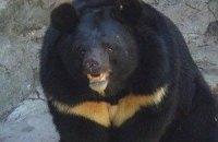 Ведмідь з вінницького зоопарку відгриз людині ногу