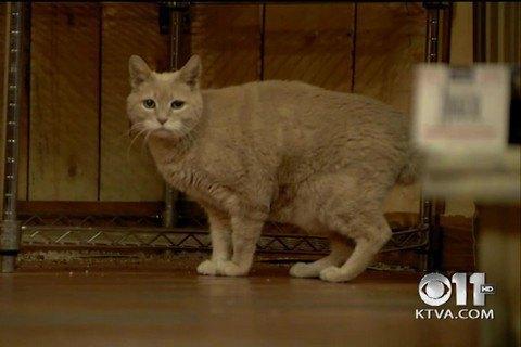 Помер кіт, який 19 років очолював місто на Алясці