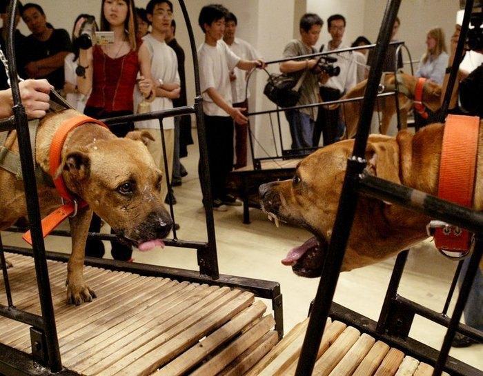 Перформанс Пэн Юй и Сунь Юаня «Собаки, которые не могут коснуться друг друга»