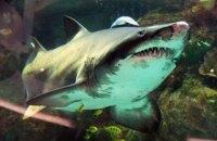 В Египте от нападения акулы пострадала украинская семья