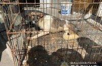 46-річна мешканка Василькова утримувала у квартирі 69 тварин, поліція прийшла до неї з обшуками