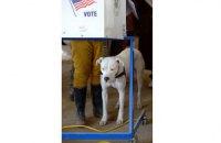 В США начались промежуточные выборы в Конгресс