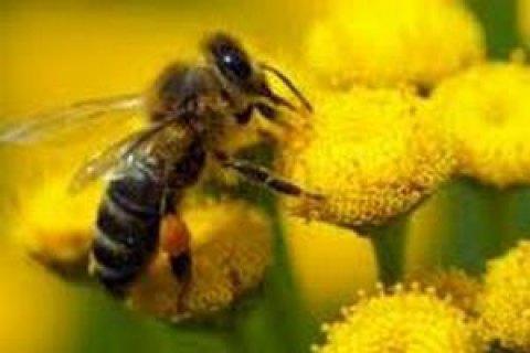 Чоловік помер після укусу бджоли в Харківській області