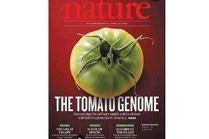Ученые определили геном томата
