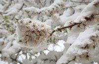 Харьков засыпало рекордным количеством снега