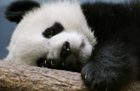 Пятничная панда #171