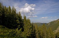Зеленський поставив за мету висадити в Україні за три роки мільярд дерев