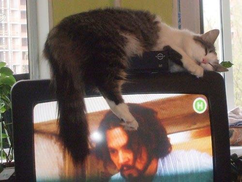 Кішка від Олесі Юрченко