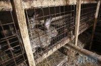 Чоловік отримав три роки в'язниці за крадіжку кролика в Одеській області