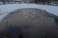 В киевские озера Лебединое и Позняки попала загрязненная вода со стройки