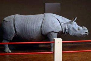 Из бельгийского музея похитили голову носорога