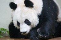 Пятничная панда #156
