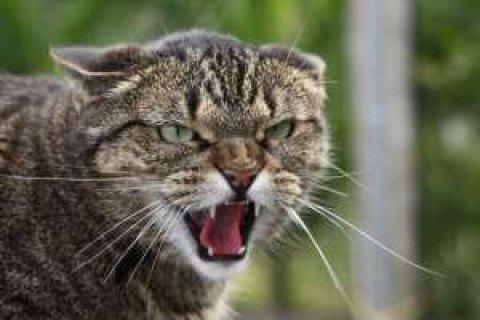 В Затоке могут ввести карантин на 60 дней из-за бешенной кошки
