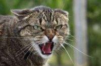 У Затоці можуть ввести карантин на 60 днів через скажену кішку