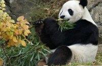 П'ятнична панда #107
