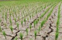 """В ООН попередили, що наступною """"пандемією"""" може стати засуха"""