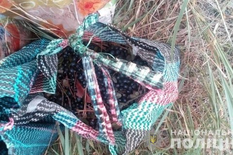 В Чернобыльской зоне задержали женщину, которая собирала чернику на продажу