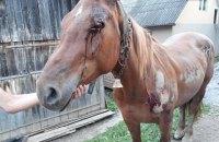 Пьяный житель Закарпатья привязал коня к автомобилю и таскал его по асфальту