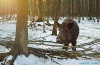 Дуда согласовал строительство стены от диких кабанов на границе Украины и Беларуси