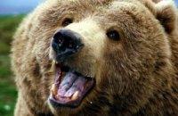 В США медведь украл из гаража мешок семечек