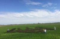 У Херсонській області виростили гігантський тризуб з чорного рису