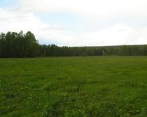 Мораторий на продажу сельскохозяйственных земель в Украине фактически не действует, - Виктор Гноевой