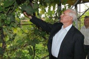 Одесские виноградари и садоводы будут платить больше налогов