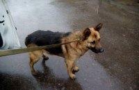 """В аэропорту """"Одесса"""" собака обнаружила кокаин у одного из пассажиров"""