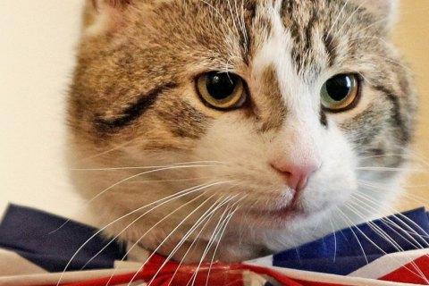 Кіт Палмерстон став новим співробітником МЗС Великобританії