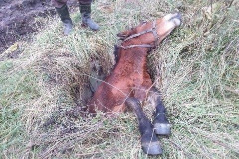 Во Львовской области спасатели достали из канализационного люка коня