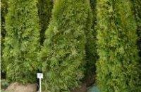Депутаты выделили еще 2 млн грн на озеленение Днепропетровска