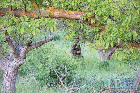 У лісосмузі біля Яворівського полігону знайшли мертвим 38-річного військовослужбовця