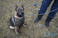 Волонтери купили собаку-шукача для розвідки в зоні АТО