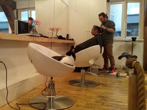 Пушистый посетитель парикмахерской
