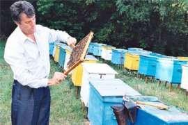 ПР: Ющенко уничтожил пчеловодство