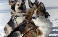 Собак-поводырей разрешили бесплатно пускать в питерское метро