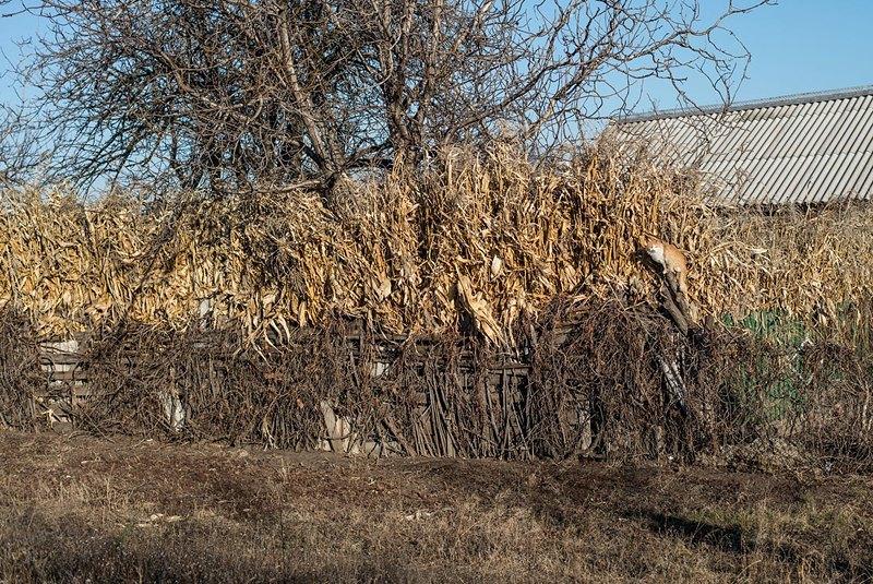 Кот греется на заборе. Согласно устоявшейся традиции, петриковские художники делают кисти из кошачьей шерсти.