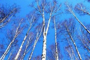 Завтра у Києві потеплішає до + 17