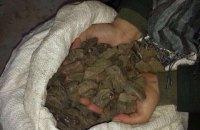 Правоохранители на Волыни изъяли 200 кг незаконного янтаря