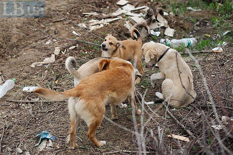Біля курілки тузяться цуценята, інколи відволікаючись на перегони за кішкою.