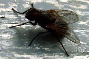 В японских войсках созданы спецотряды для истребления мух