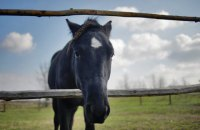 """Директора филиала """"Коневодства Украины"""" в Луганской области подозревают в растрате 0,9 млн гривен"""
