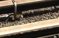 В Нью-Йорке остановили метро ради спасения котят