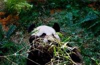 Пятничная панда #126
