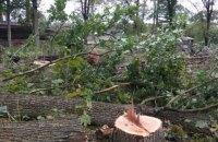"""У Бучі """"тітушки"""" побилися з поліцією і місцевими жителями, які протестували проти вирубки лісу"""