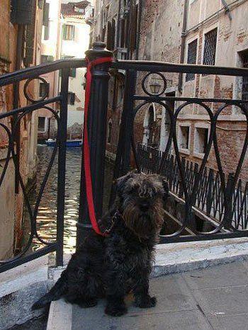 Фото собаки в Венеции нам прислала читательница Наталья