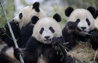 П'ятнична панда #101