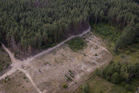 ДБР зацікавилося вирубкою лісу в Харківській області після візиту Зеленського